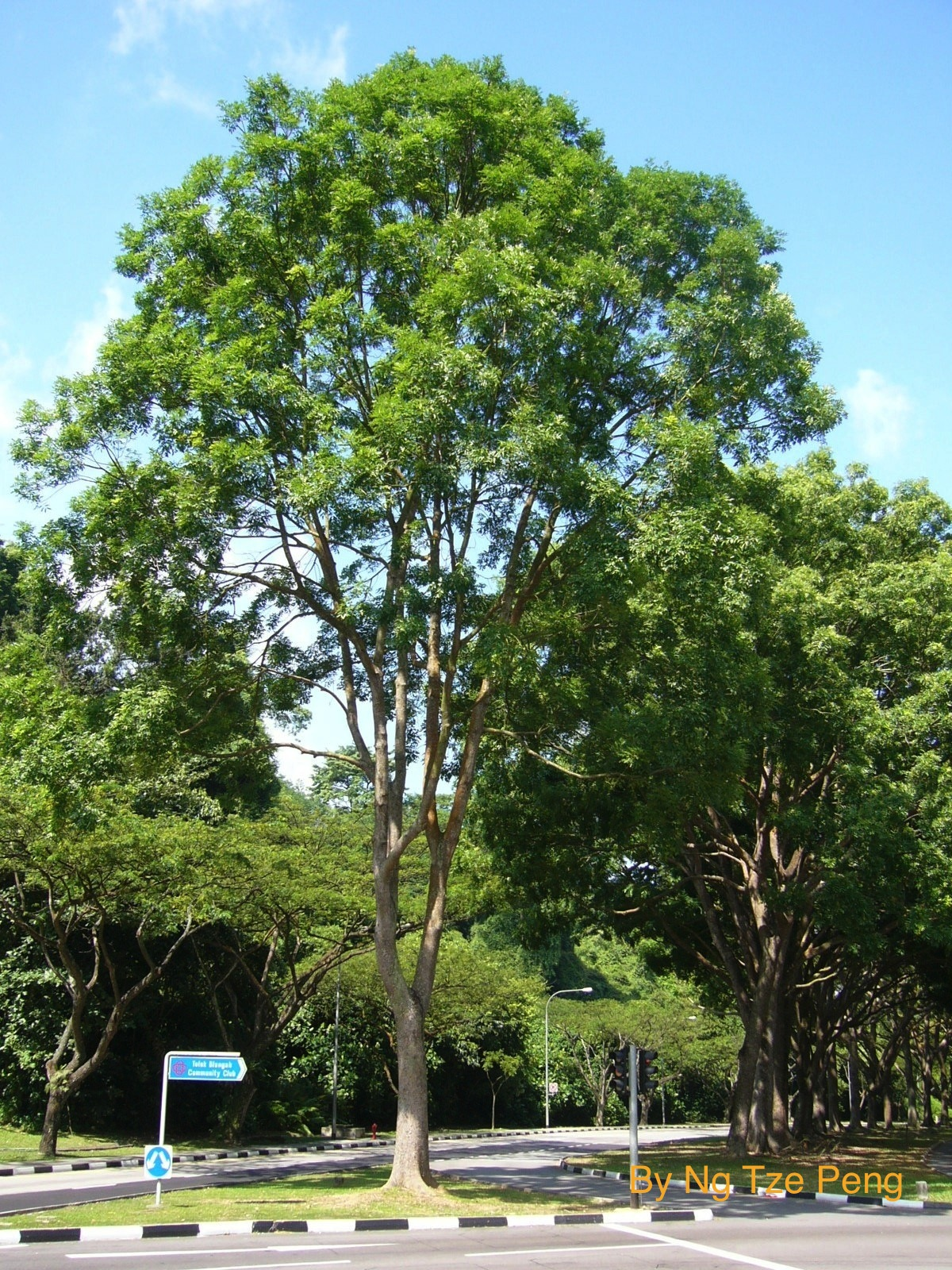 TP Arbo Care Pte Ltd (Arborist and Tree assessment service ...